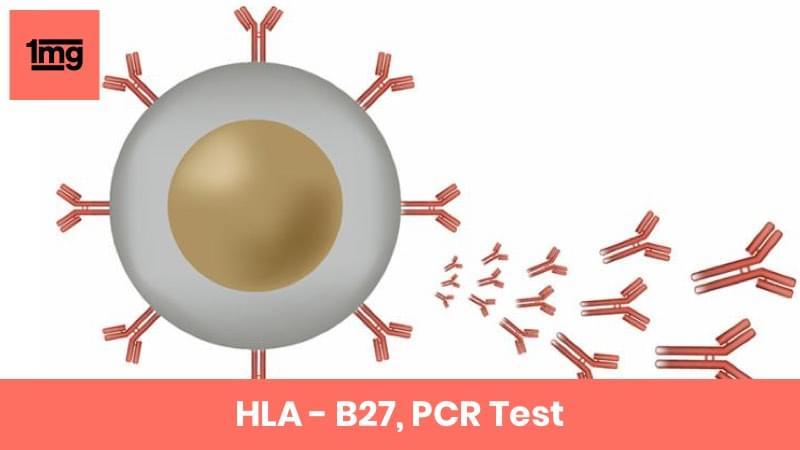 HLA - B27, PCR