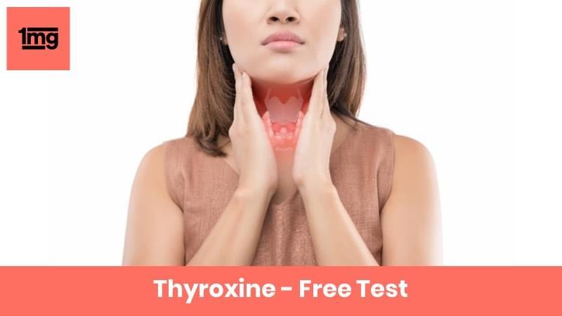 Thyroxine - Free